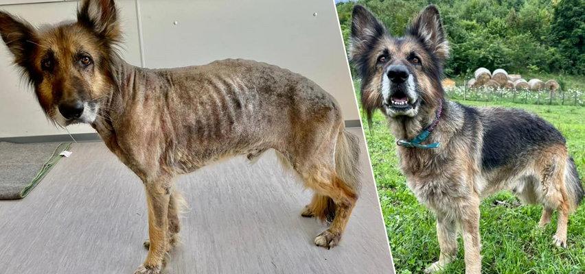 Wychudzony pies miał być oddany właścicielce. Obrońcy zwierząt uparli się i go zatrzymają