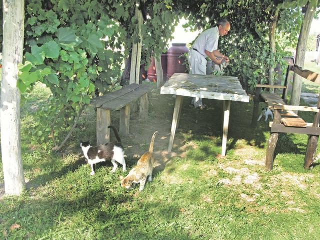 Nije isto držati mačku u stanu u nekoliko kvadrata i u prostranom dvorištu na selu, objašnjava Ilija Vujanić podsećajući na apsurdnost odluke iz 1995. godine