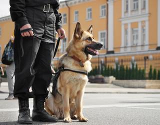 Policyjne czworonogi z godną emeryturą