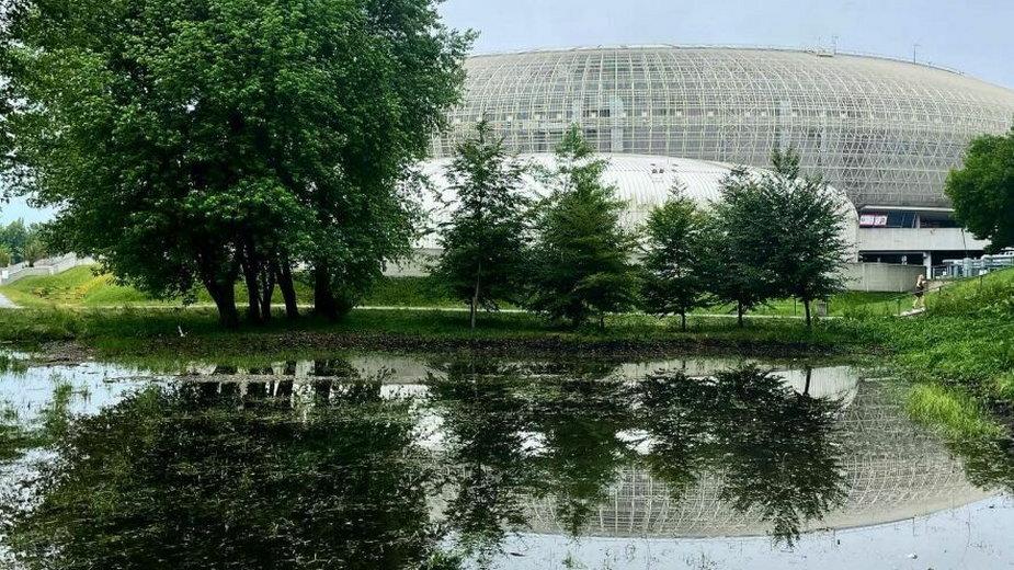 Staw z wody opadowej w Parku Lotników Polskich
