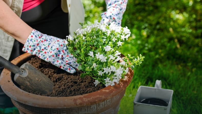 Naturalne Sposoby Pielęgnowania Roślin Doniczkowych Dom