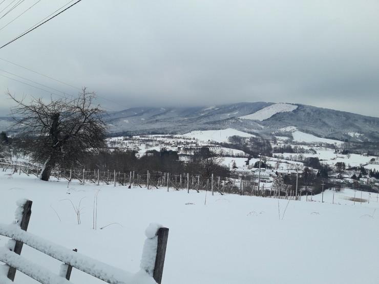 Selo Ražana kod Kosjerića, krava, sudar