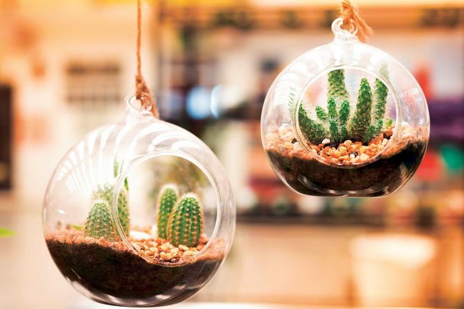 Biljke oplemenjuju svaki prostor