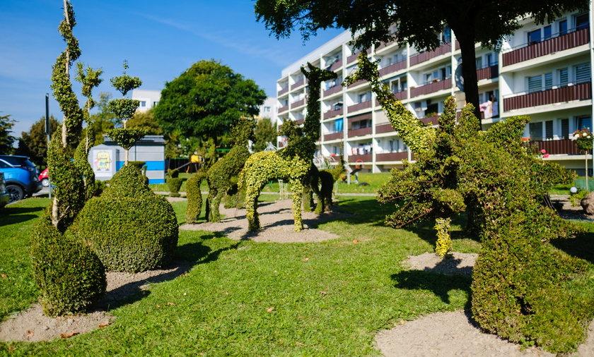 Piękny ogród z niezwykłymi topiarami powstał na osiedlu w Żorach