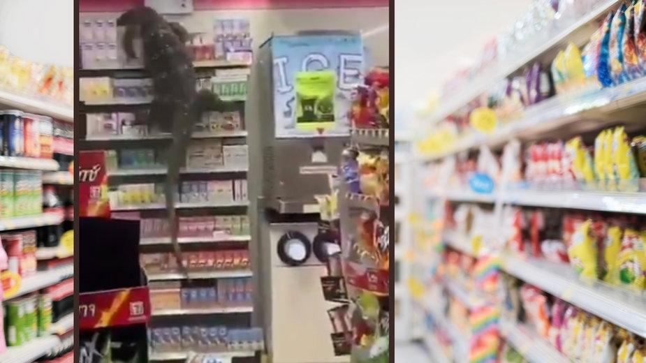 Tajlandia: jaszczurka weszła na półkę sklepową (fot. Twitter)
