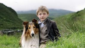 Lassie - galeria