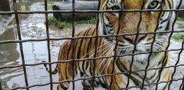 Przełomowy wyrok ws. zwierząt z nielegalnej hodowli. Odebrano je właścicielowi