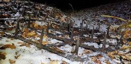 Zabójcze pułapki w podkarpackich lasach. Ktoś chce dokonać samosądu? Szokujące zdjęcia