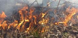 Strażacy gasili pożar. W okolicy znaleźli martwego mężczyznę