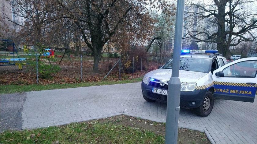 Poznań: dziki w przedszkolnym ogródku. Jeden był agresywny