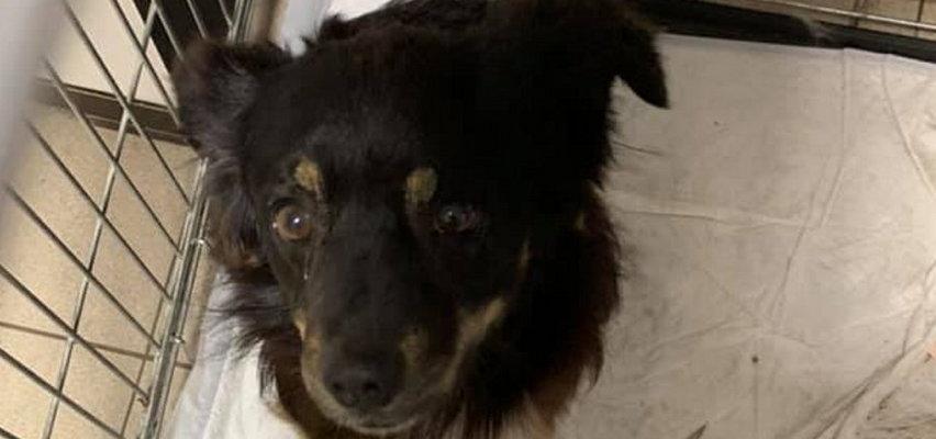 Dzieci uratowały psa wyrzuconego z auta