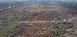 Potężny krzyż w lesie na Podlasiu. O co chodzi?