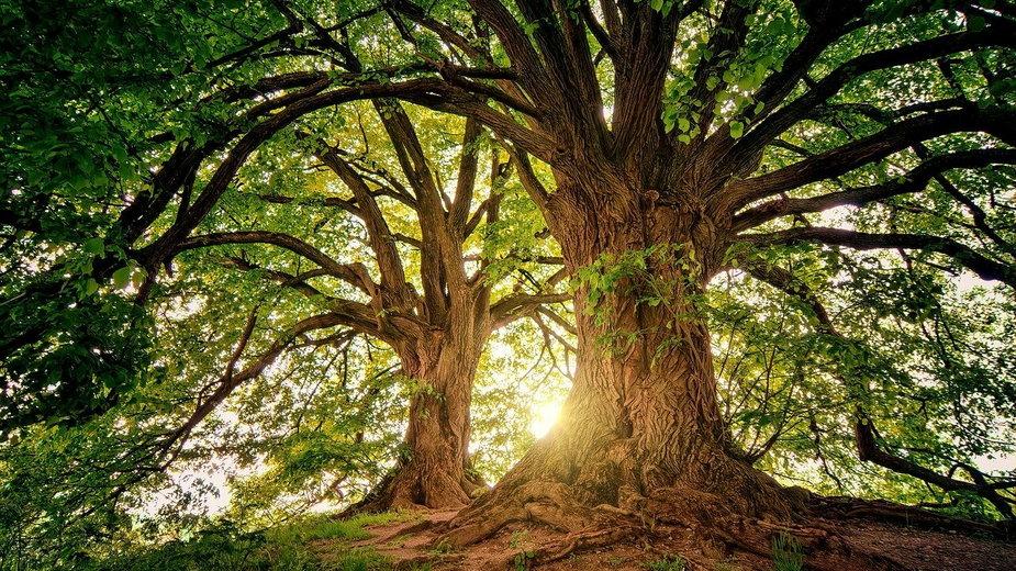 Познань: город посадит более 200 тысяч деревьев