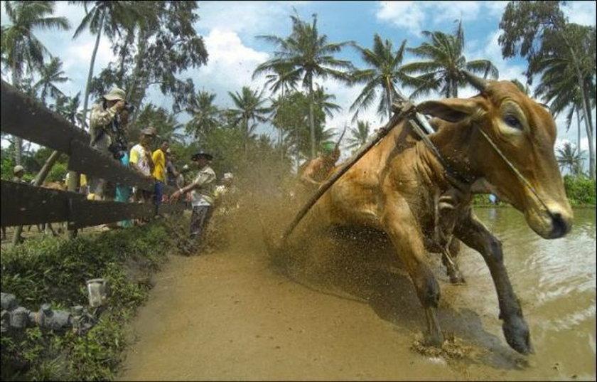 Muł podczas usuwania skutków powodzi