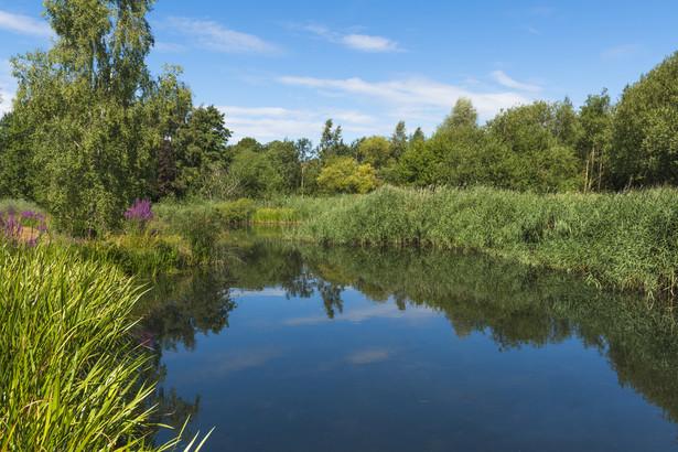 Stawy, w szczególności stawy rybne oraz stawy przeznaczone do oczyszczania ścieków albo rekreacji są według prawa wodnego urządzeniami wodnymi.