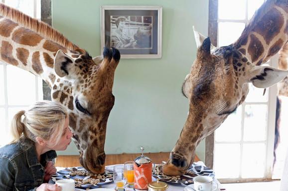 Žirafe za doručkom? Moguće u ovom hotelu