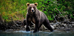 Spotkałeś niedźwiedzia? Zobacz jak powinieneś się zachować!