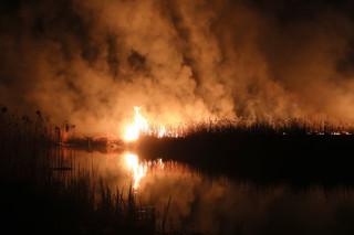 Szwecja: Strażacy gotowi pomóc w gaszeniu pożaru w Dolinie Biebrzy
