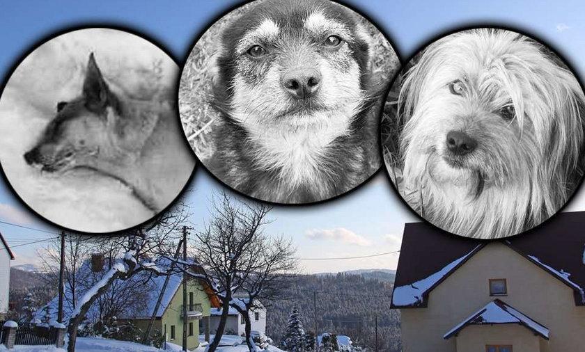 Tajemniczy truciciel psów