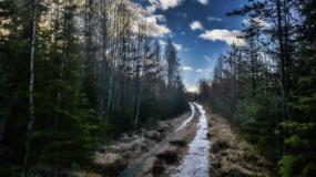 Szwecja chce spalić 2200 hektarów lasów, dla... zwiększenia bioróżnorodności