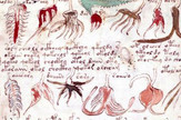 Vojničev rukopis