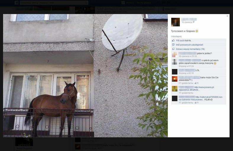 Grajewo: koń na balkonie