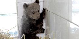 Zaproponuj imię dla maleńkiej niedźwiedzicy
