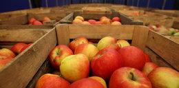 Takich cen jeszcze nie było! Polskie jabłka droższe niż banany i ananasy