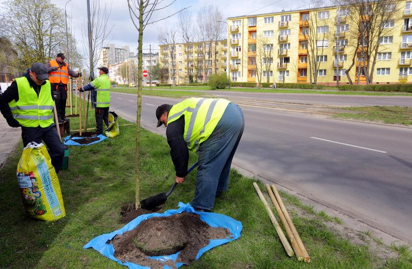 Sadzenie drzew przy Zielonej