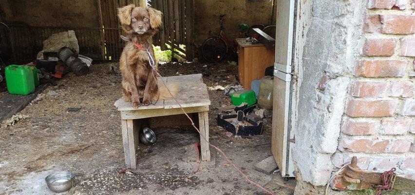 Zwierzaki żyły w potwornych warunkach. Pomóż im znaleźć domy