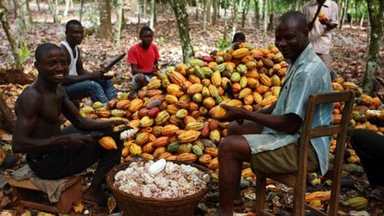 Ondo to begin chocolate production April 2016
