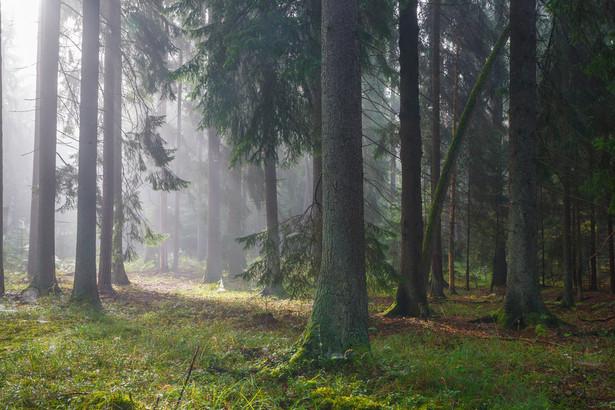 Właściciele lasów muszą opłacić podatek