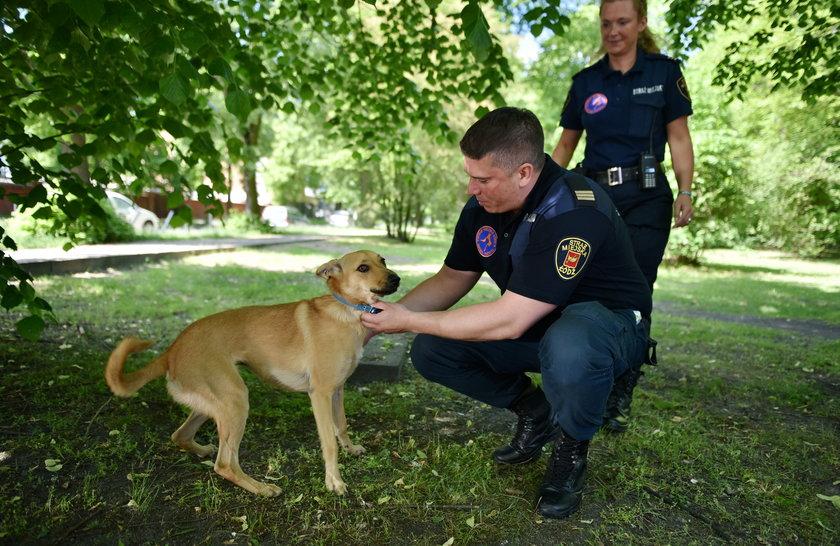 Straż miejska w Łodzi utworzyła zespół do interwencji związanych ze zwierzętami