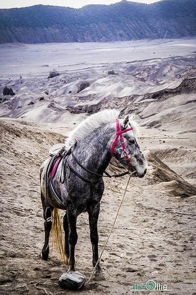 Koń na Bromo, fot. the-ollie.com