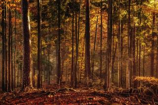 Rząd planuje unormować działalność parków narodowych i powołać Polskie Parki Narodowe