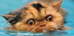 Koty też potrafią pływać. Zobacz!