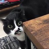 """Mačka nije znala kako da se požali vlasniku, pa je od muke """"PROGOVORILA"""""""