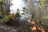 Požari u prirodi najčešći