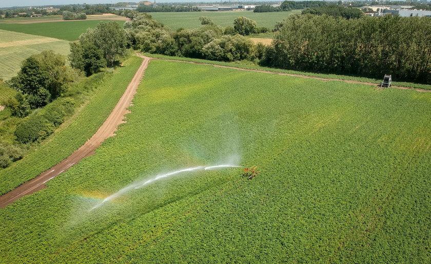 Ile wody pochłania produkcja żywności?