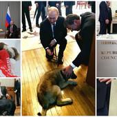 PUTIN I NJEGOVI LJUBIMCI Ruski predsednik obožava životinje, a srpski šarplaninac biće njegov ČETVRTI PAS