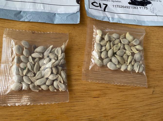Radi se na istraživanju porekla semena