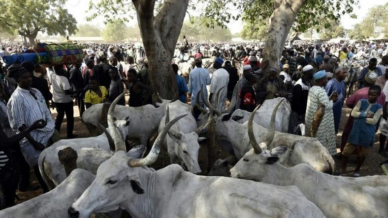 Rural communities in Zamfara have been under siege for several years from cattle rustlers and kidnapping gangs