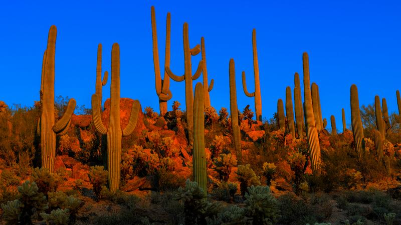 Park Narodowy Saguaro