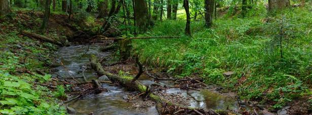 W związku z koronawirusem Lasy Państwowe wprowadzają tymczasowy zakaz wstępu do lasów - poinformowało Ministerstwo środowiska.