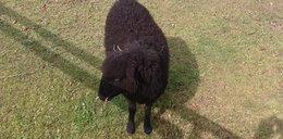 Czarna owca w rodzinie!