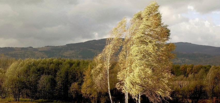 Pogoda na poniedziałek 25 października. Będzie chłodno i wietrznie. Czy spadnie deszcz?