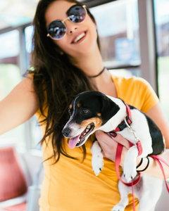 Pies w komunikacji miejskiej - jak należy się zachować?