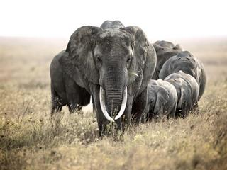 Voices From The Savannah: Gary Roberts' Stunning Photos Of African Wildlife