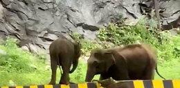 Te słonie to spryciarze!