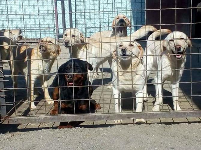 Zbg sve većeg napuštanja pasa Prihvatilište u Kraljevu je prepuno